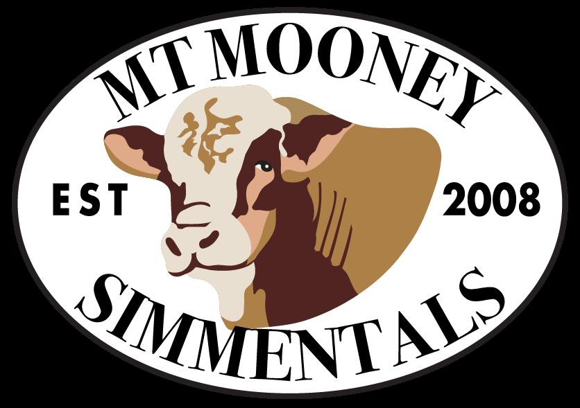 Mt. Mooney Simmentals - Simmental Cattle