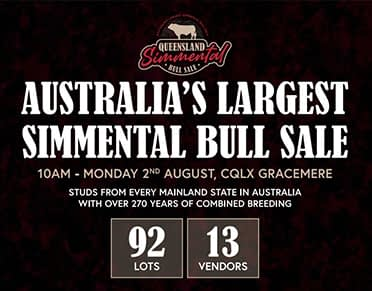 Queensland Simmental Bull Sale Catalogue Out Now