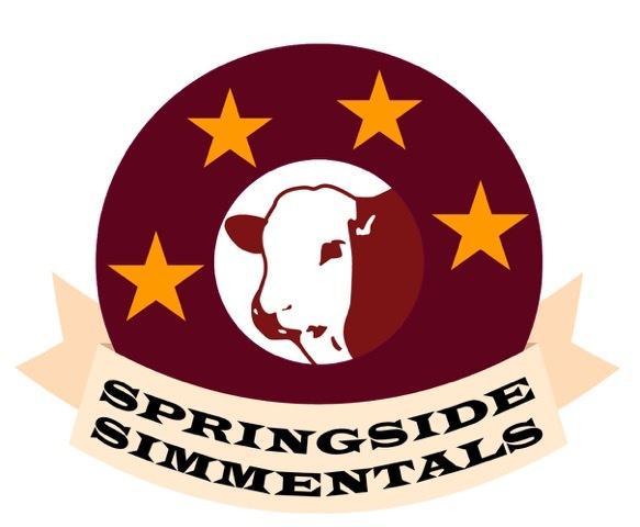 Springside Simmentals