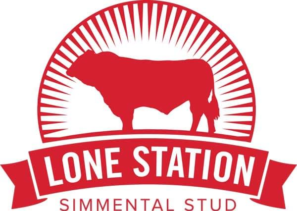 lone station - Simmental Cattle