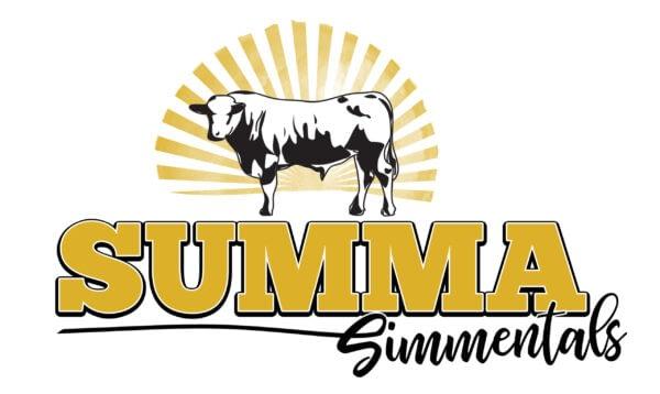 summa simmentals -Simmental Cattle